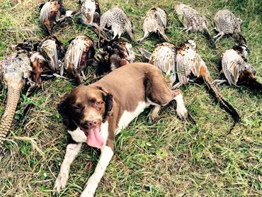 Annual Pheasant Hunt